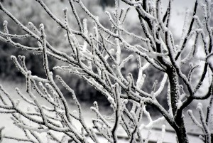 evil winter