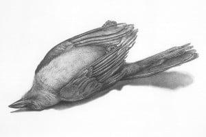 big_bw-birds-41